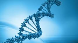 Патентное ведомствo одобрит заявку Merck на технологию CRISPR